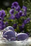 easter jajek kwiaty purpurowi Obrazy Royalty Free