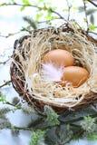 easter jajek piórka gniazdeczko Obrazy Stock