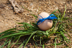 easter jajek trawy zieleń Zdjęcia Stock