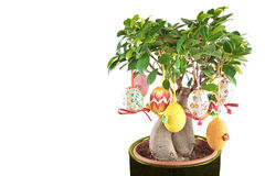 easter jajek wiosna drzewo Fotografia Stock