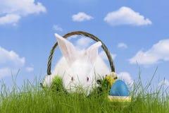 easter kanin Arkivbild