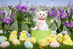 Easter Kitten in Flower Garden with chicks. One fluffy white kitten standing in a green planter bowl up away from fuzzy yellow chicks and easter eggs in green Royalty Free Stock Image