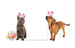 Easter Kitten and Puppy Blank Sign Royalty Free Stock Photo