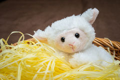 Easter Lamb Stock Photography