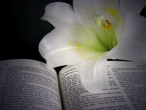Easter lily illuminated on Bible Stock Photo
