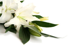 Easter lilies Royalty Free Stock Photos