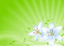 Easter lilies background Stock Image