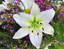 easter lilja