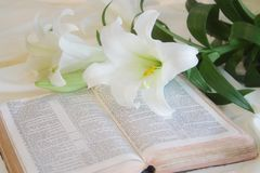 Lily laying on a antique bible on Easter morning Royalty Free Stock Photography