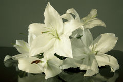 Easter lily. Flower close up Royalty Free Stock Photography