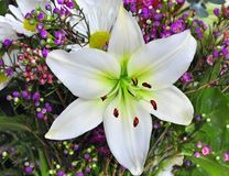 Easter Lily. In a bouquet royalty free stock photography
