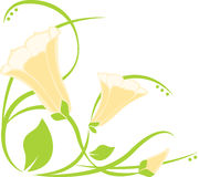 Easter Lily Corner Royalty Free Stock Photography