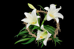 Easter lily with crown of thorns Royalty Free Stock Photo