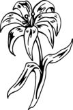 Easter Lily Vector Illustration. A vector illustration of an Easter Lily stock illustration