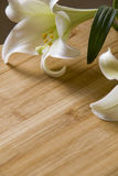 Easter Lily on Wooden Background Stock Photo