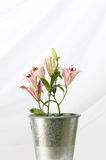 Easter lilys Royalty Free Stock Photos