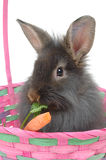 Easter lion rabbit 2 Royalty Free Stock Images