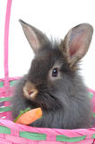 Easter lion rabbit 4 Stock Photos