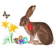 Easter little bunny with daffodils and butterflies. Vector illustration Royalty Free Stock Images