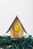 Little chicken on wooden birdhouse. Easter little chicken on wooden birdhouse with grass Royalty Free Stock Image
