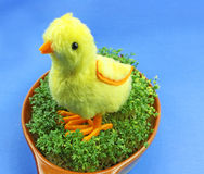 Easter little chickens Stock Photos