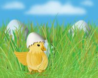 Easter little yellow chick in the grass Royalty Free Stock Images