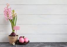 easter livstid fortfarande Rosa hyacint i en kruka och påskägg i ett rede på en vit bakgrund Arkivfoton