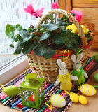 Easter morning. With the small basket of cyclamens and sparse easter eggs Stock Image