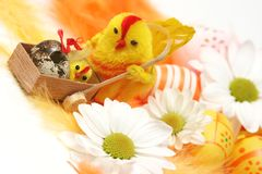 Easter motive. Hen and her chick on easter background Stock Photo