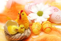 Easter motive. Hen and her chicks on easter background Royalty Free Stock Photography