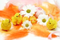 Easter motive. Chicks on easter background Royalty Free Stock Photography
