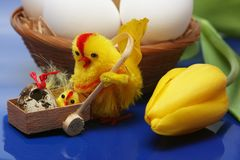 Easter motive. Hen and her chick with yellow tulip,white eggs on blue background Stock Photo