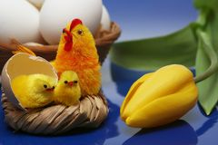 Easter motive. Hen and her chicks with yellow tulip on blue background Stock Images