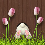 Easter motive, bunny bottom, pink tulips and fresh grass on dark brown wooden background, illustration Stock Image