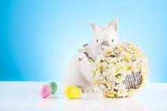Easter. Motive. White  Bunny Stock Image