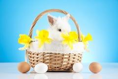 Easter. Motive. White  Bunny Royalty Free Stock Photo