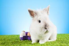 Easter. Motive. White  Bunny Royalty Free Stock Image