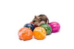 Easter mouse with eggs Stock Photography