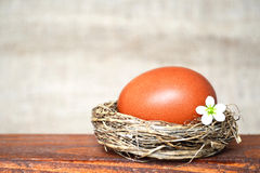 Easter nest with brown egg and white spring flowers Royalty Free Stock Images