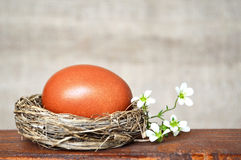 Easter nest with brown egg and white spring flowers Royalty Free Stock Photo