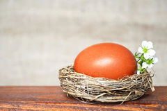 Easter nest with brown egg and white spring flowers Royalty Free Stock Image