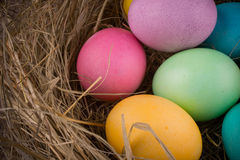 Easter nest with colored eggs Stock Photos