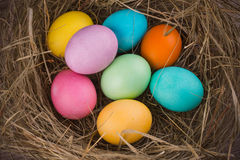 Easter nest with colored eggs Stock Photo