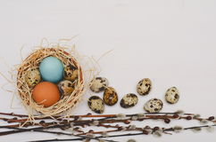 Easter nest with colorful eggs and pussy willow twigs Stock Images