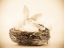 Easter nest and easter bunny ears (1). Easter nest and with easter bunny ears behind, sepia image Stock Photo