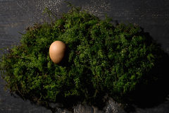 Easter nest, Easter egg on moss Royalty Free Stock Photography