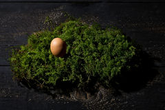 Easter nest, Easter egg on moss Stock Photos