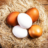 Easter nest with Eggs  on wooden background with copyspace. Whit Stock Photos