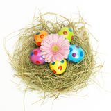 Easter nest with a pink flower Royalty Free Stock Images