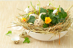 Easter nest with quail eggs Stock Images